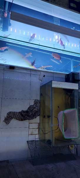 Aquarium+ph+box filter+lampu