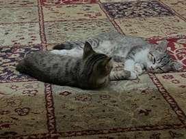 kitten mixdom 2 bln