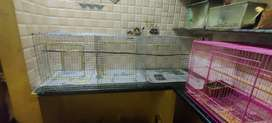 Cages available