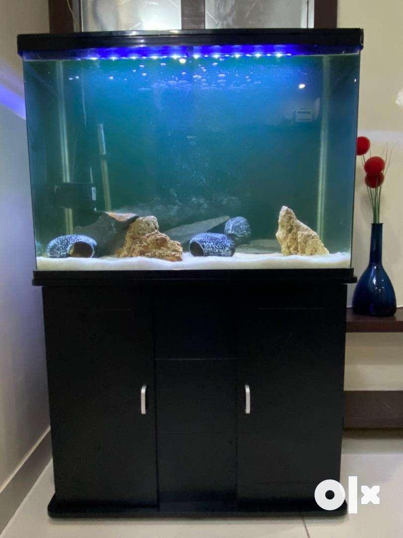 Aquarium With Stand & Accessories 0