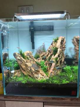 Natural Planted aquarium
