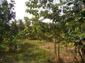 Dijual Cepat Tanah Seluas 2.5 H, di Tengah Kota Serang Banten