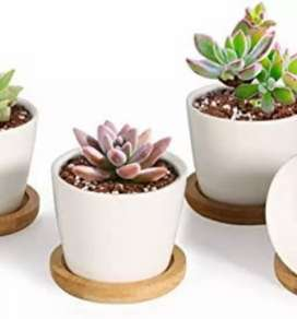 All types of Succulent & Cactus plants available for sale