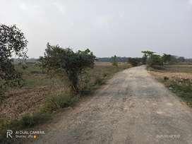 4 Bigha Miyadi Land