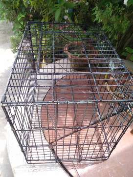 Branded Iron cage for dog and bird