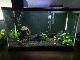Aquascape / Aquarium / Ikan Discus