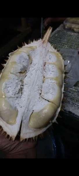 Durian montong lokal