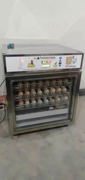 80 eggs Paradise Farms incubator fully automatic invertor model