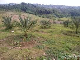 Jual kavling  tanah kebun & ternak IPB keluar tol Cibubur
