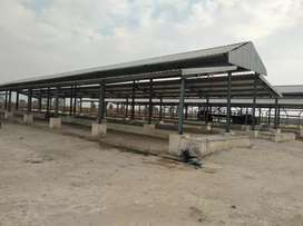 Dairy Farm with 67 Acres for sale