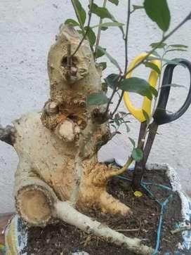 Bahan bonsai dan taman