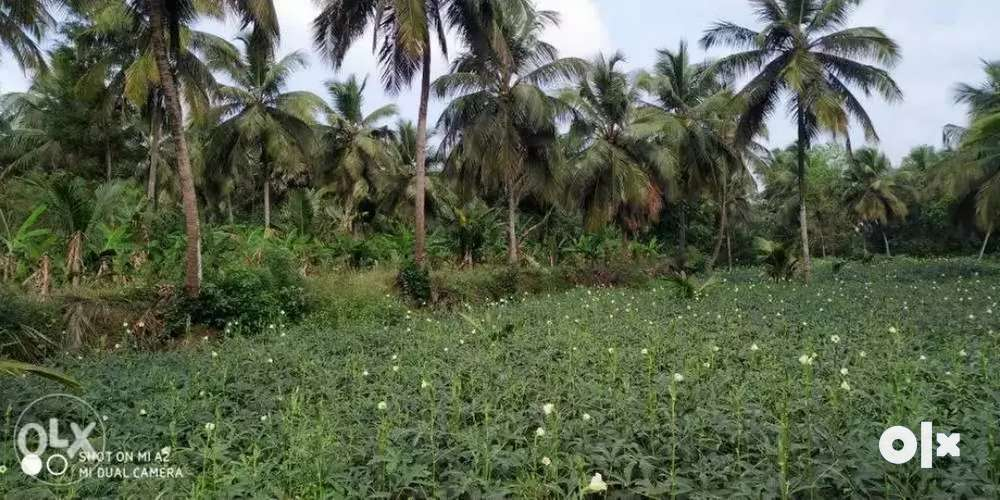 3.5 acres farm land rent kozhinjampara