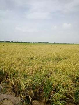 Agriculture Land Available