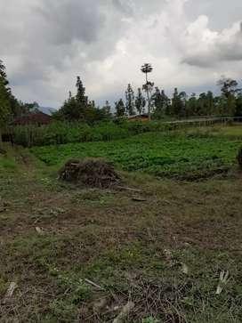 Murah Tanah Kebun di Ciwidey