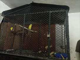 3 portion cage