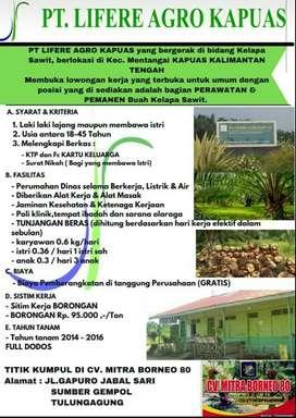 Lowongan perkebunan kelapa sawit
