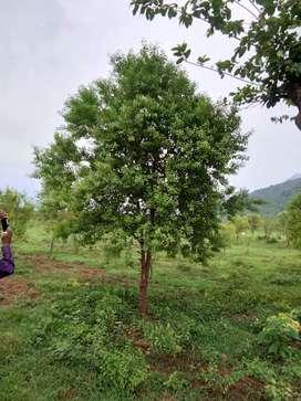 Rs 1699 per sq yard Farm Plots Araku Ananthagiri