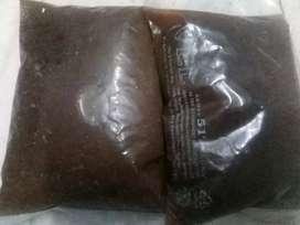 Frozen artemia