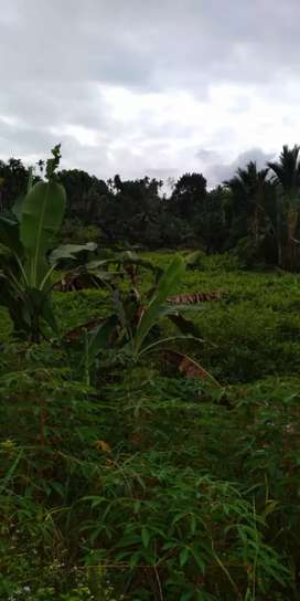 Tanah & Ladang Murah serta Luas di Glugur Rimbun