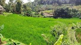 Tanah Sawah Dekat Jl raya Bojong Wanayasa Purwakarta Dijual Murah