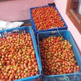 Jual tomat cerry segar