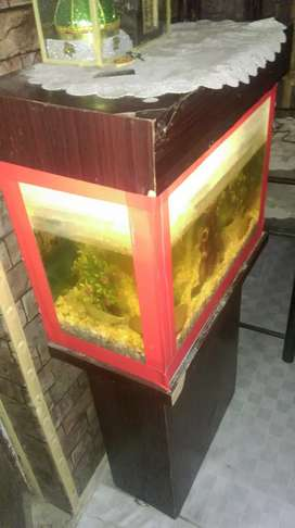 2 feet fish aquarium bilkul ok