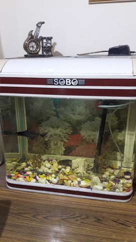 Complete Aquarium For Sale