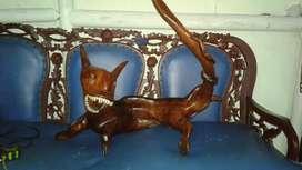 Patung kucing dari akar jati pangjang 80cm tinggi 70 cm