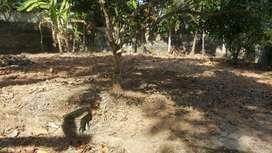 25 cent land  (3 plots- 10,6.75,6.25) near Idathara,TVM