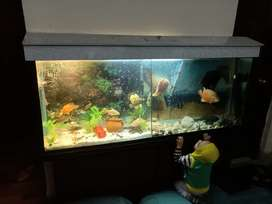 full size AQUARIUM (18 fishes) first read DETAILS