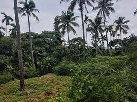 40 cent of L shaped plot near Kalluvathukal