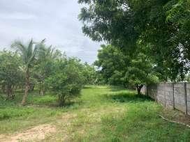 Punjai patta land sale at chengalpattu to Mambakkam