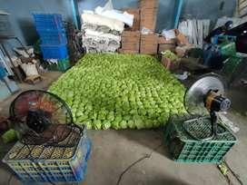 Supplier Lettuce