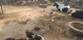 Near Sevraje plant ghormara pull in nagar parishad ward no 1