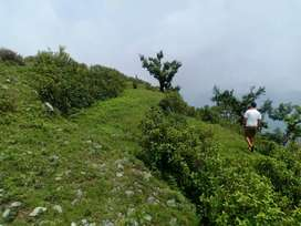 8 nali gd location. Dharkot kimsar road Rishikesh se distance 35 kmtr