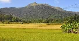 മൂന്നിയൂർ / ചെമ്മാട് (മലപ്പുറം)ഭാഗത്ത് ഒരു പാടം(വയൽ)ലീസിന്