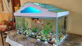Fish Tank Big with all Accessories for Sale