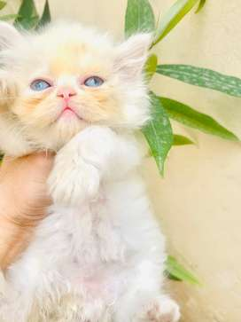 Vry cute extreme punch kittens