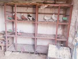 birds cage 5 difrnt pric difrent size gujarkhan