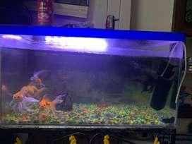 Big aquarium with stand