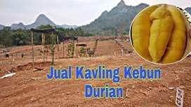 Jual Tanah Kavling di Bogor Cariu dan Tanjungsari Bogor