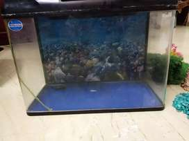 ACQUATIC ITEMS FOR SALE INCLUDING PUMP, MOTOR, STONES OF 15 VARITY'S.