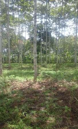 Dijual Cepat Tanah di Lampung Utara