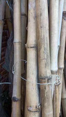 Bamboo for sell bans 50% less