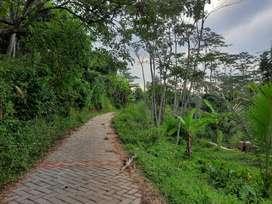 Tanah kebun gunung Pati - Ungaran 4052 meter