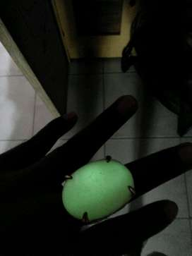 batu posfor natural alam no bacan no ruby