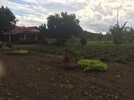 Tanah Kavling Murah