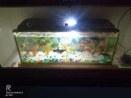 aquarium good one