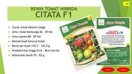 BENIH TOMAT HIBRIDA Varietas CITATA F1