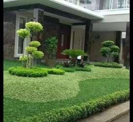 tukang jual rumput taman pembuatan taman